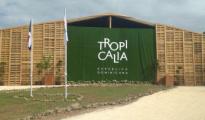 miches-tropicalia